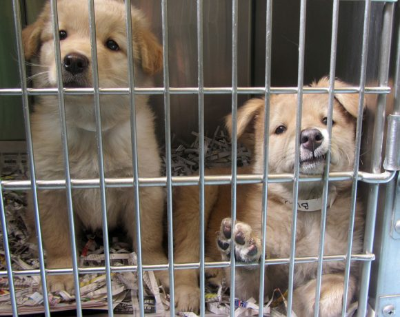 Low Cost Spay And Neuter Action For Animals Humane Society